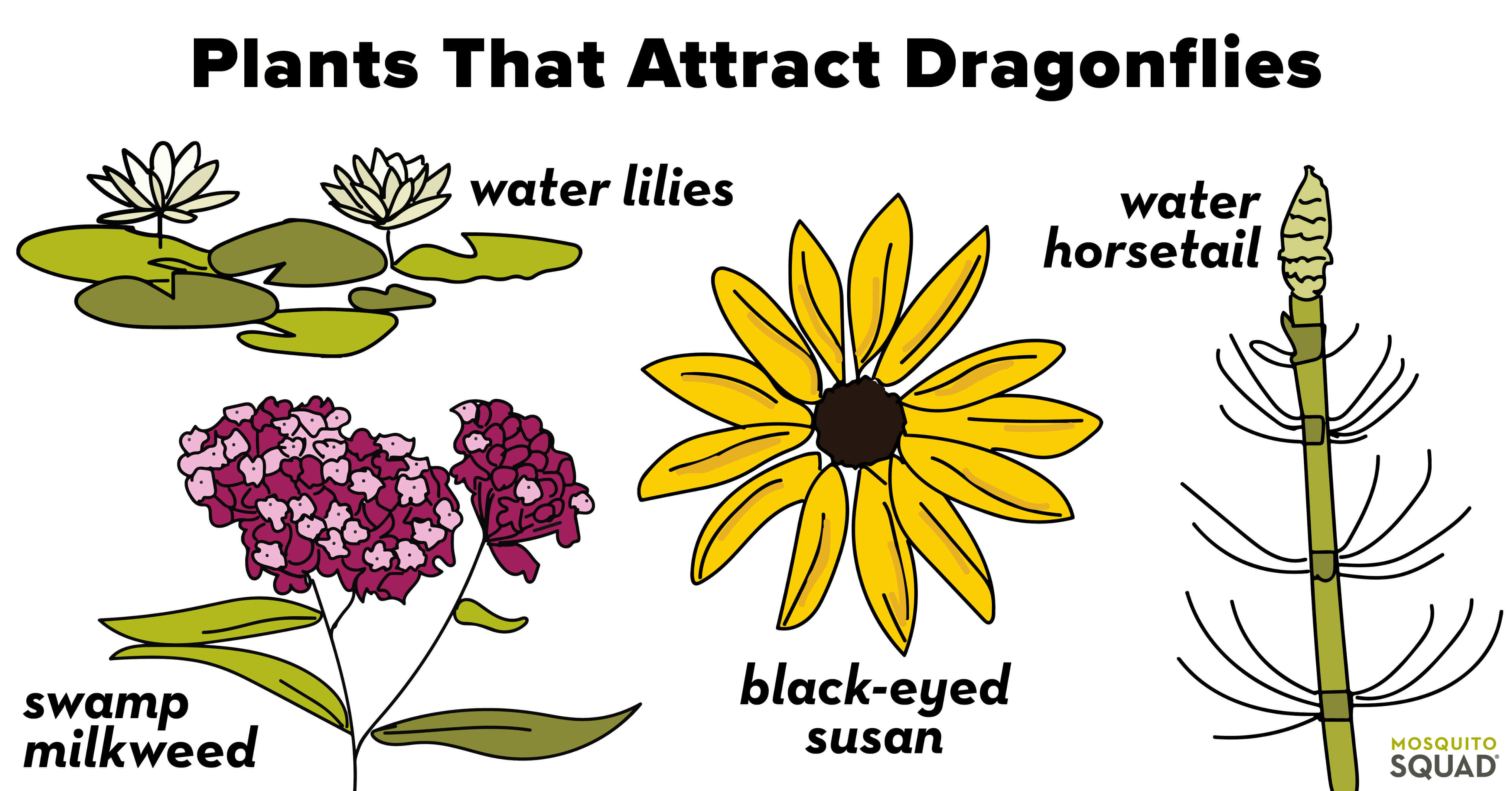 Plants that attract dragonflies