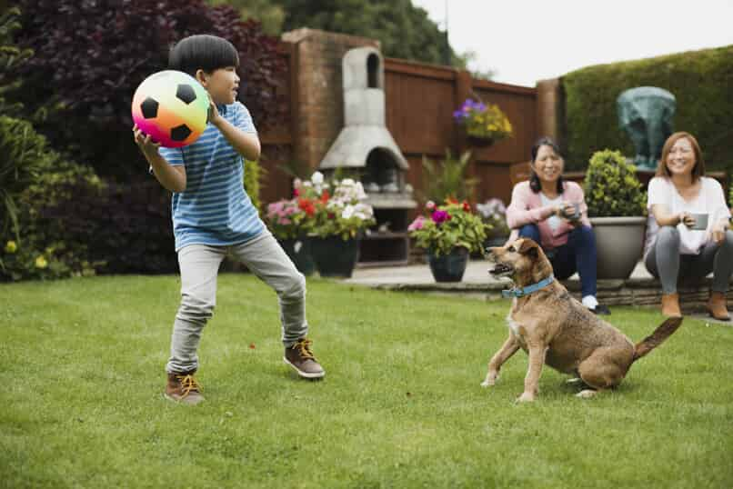 kid playing with ball and dog in yard