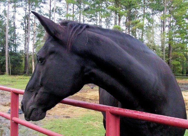 A photo of a horse