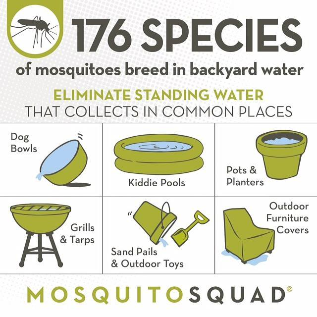 An info graphic that explains the parts of your yard that are most likely to cause mosquitoes to bree