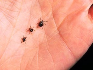 ticks in hand