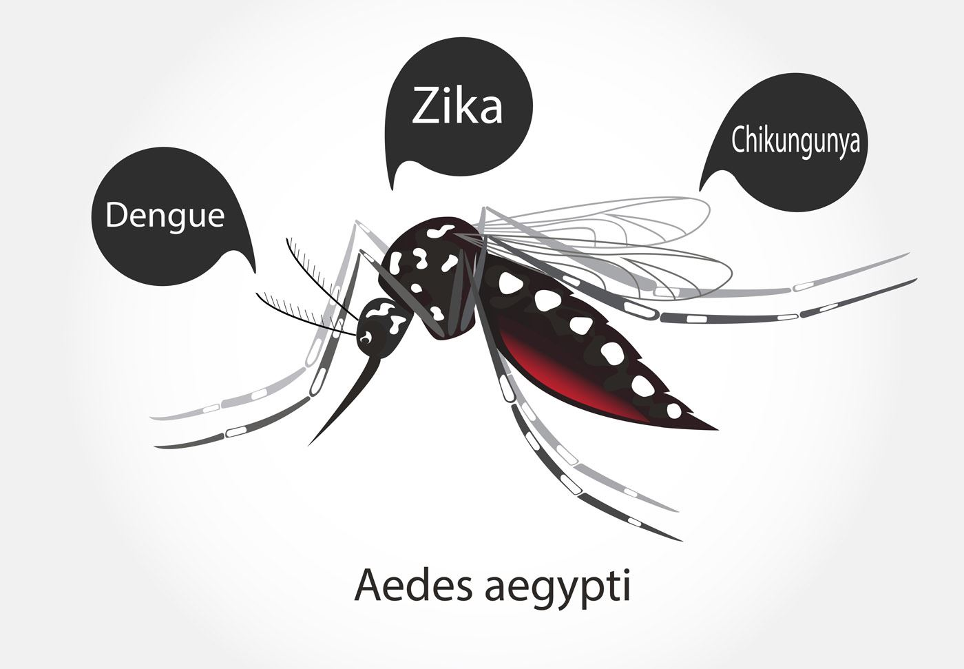 Zika and Dengue from mosquitoes