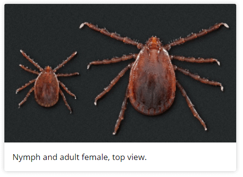 asian loghorned tick cdc