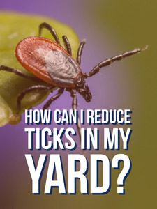 Reduce ticks in your yard.