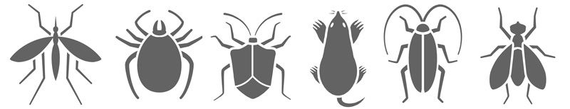 Infographic of different types of insects