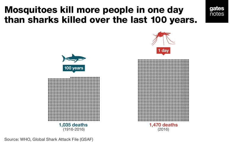 Mosquitoes kill more people in one day than sharks killed over the last 100 years.  1916-2016: Sharks killed 1,035 people.  In one day in 2016: 1,470 people die from mosquito-borne diseases
