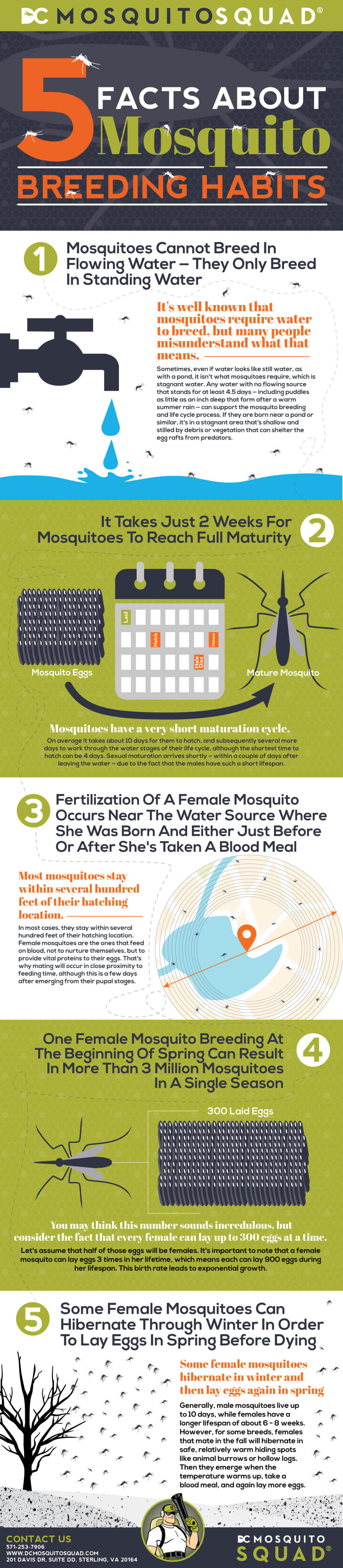 Infographic showing 5 Facts About Mosquito Breeding Habits