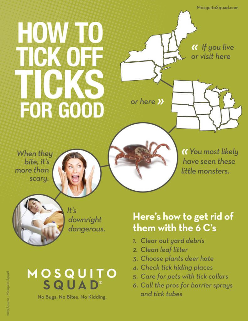 Tips on how to get rid of ticks in your backyard.
